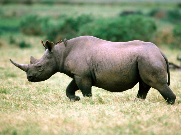 Apps for Tracking Rhino Poachers