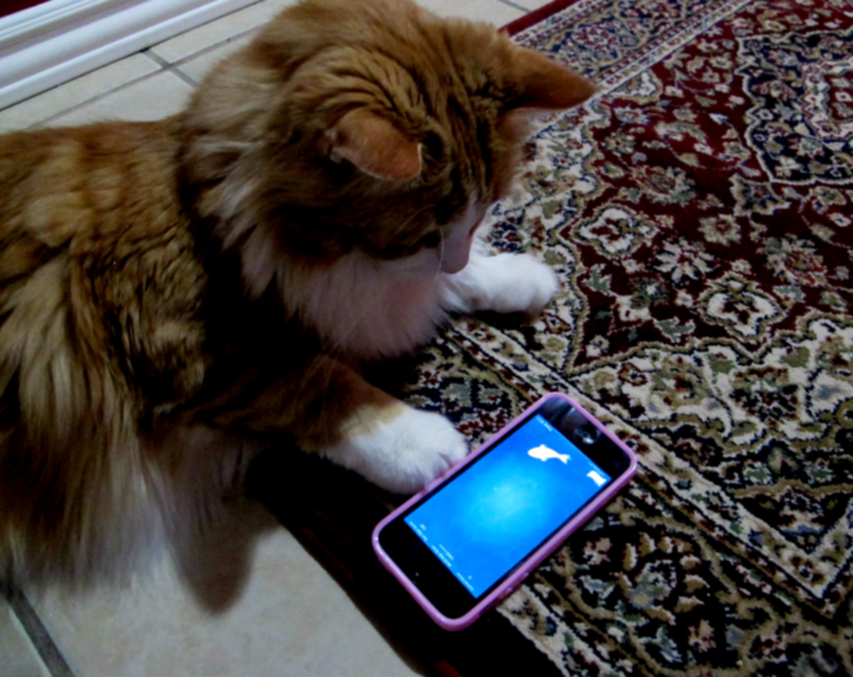 New Feature: Paw Activated Photo and Barcode Scanner* – GoCanvas