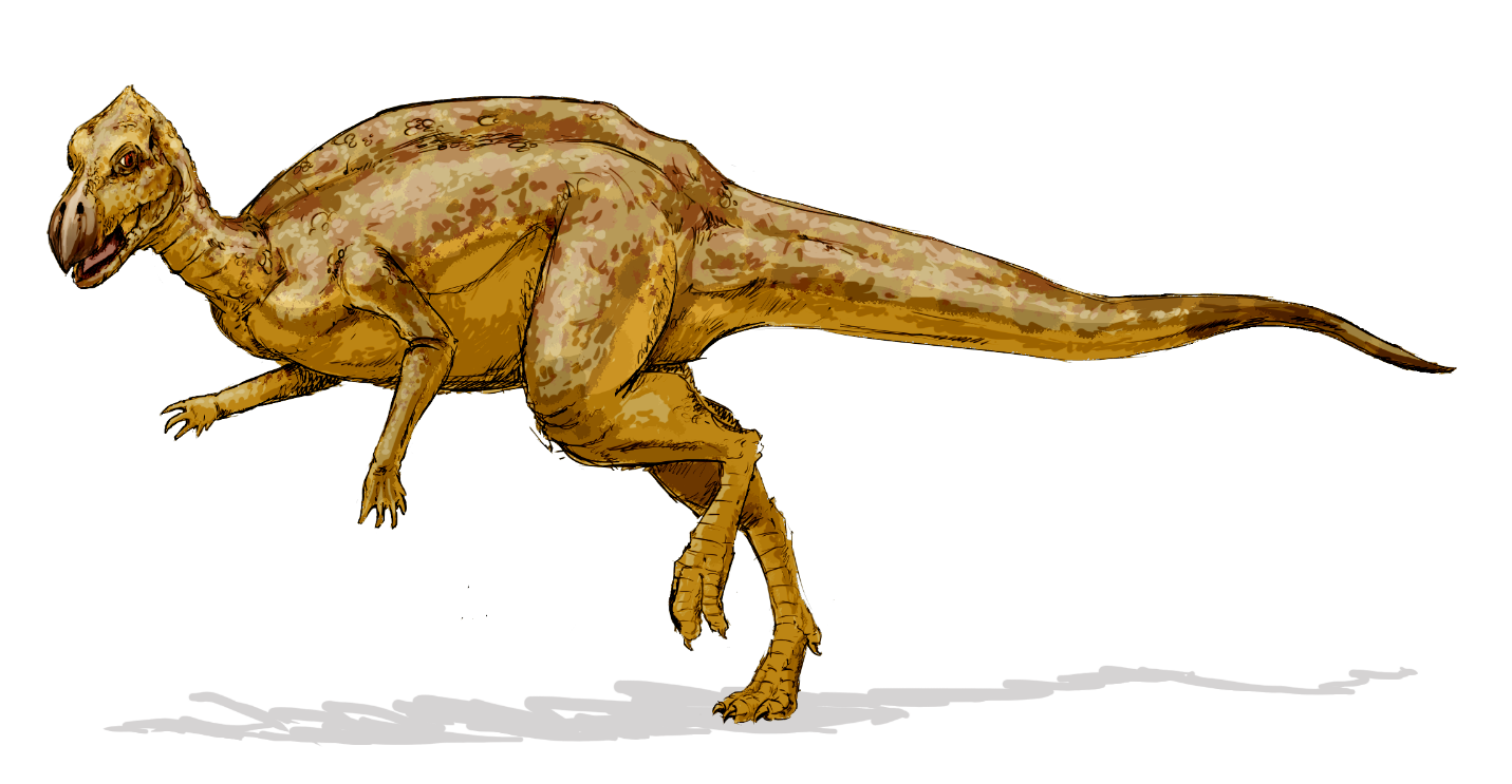 dinosaur, Z. robustus, business status quo turns into a dinosaur. genus of dinosaur from the Late Cretaceous. Iguanodont.